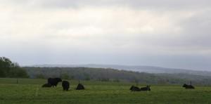 Byrne Black Angus Farm, Skaneateles NY