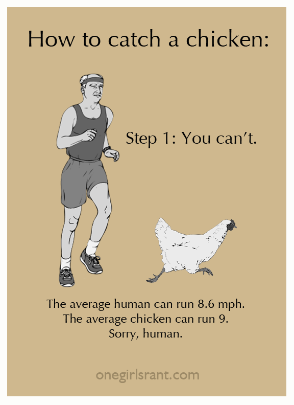 Step 1, you can't. Average human runs at 8.6MPH. The average chicken - 9mph. Sorry.
